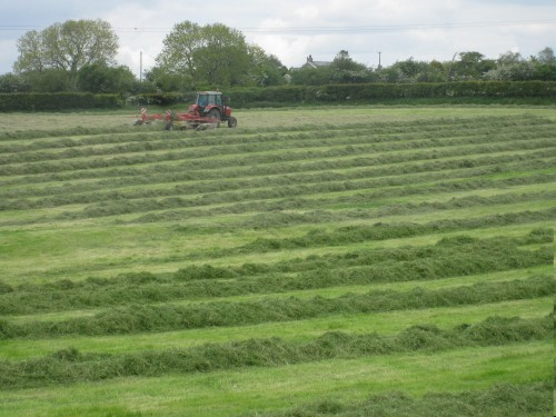 SIlage with Michael 009