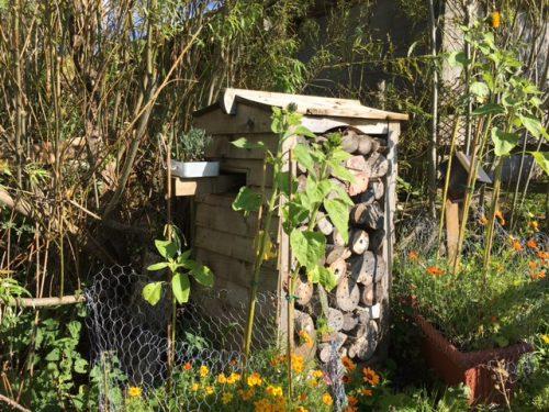 bee garden 3