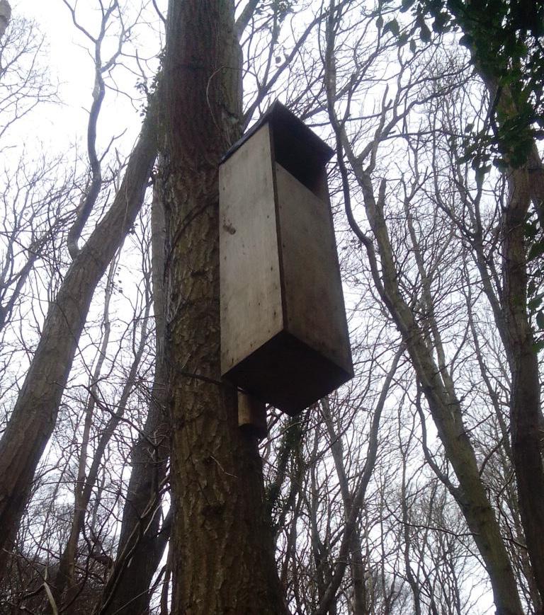 owl box coed y felin